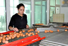 the-egg-crisis-from-stores-leads-to-price-increases