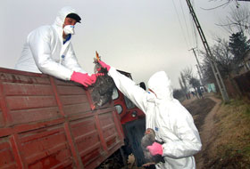 new-outbreak-of-bird-flu-in-romania-