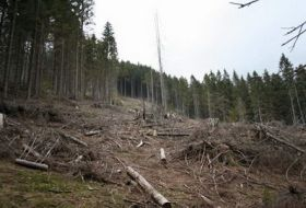 12000-cases-of-illegal-logging-in-romanias-forests-in-2017