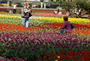 new-tulips-transports-from-the-netherlands-hindered-at-customs